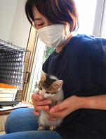 一時預かり在宅ボランティアの女性に甘える子猫。人間の温かさを伝えるのも重要な役割だ(京都市北区)
