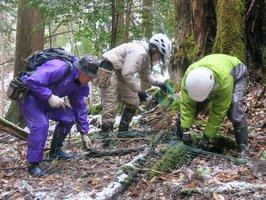 「芦生ワサビ」を守るためのシカよけネットを設置するプロジェクトメンバー(南丹市美山町芦生)