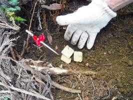 滋賀県高島市の山中に埋めたワクチン入りの餌(滋賀県提供)