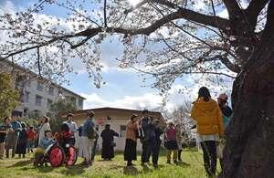 咲き始めた桜の下、避難生活を振り返る避難者と支援者(3月31日、京都市伏見区・国家公務員宿舎桃山東合同宿舎)