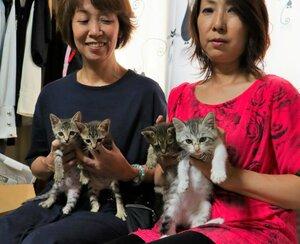 19日の譲渡会で里親を募集する保護猫(京都府与謝野町岩滝)