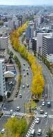 緩やかにカーブしながら堀川通の中央分離帯を黄色く染めるイチョウ並木(13日、京都市上京区)=小型無人機から