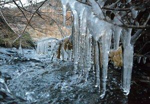 鴨川では、水しぶきが凍り付いてつららになっていた(2021年1月8日午前7時20分、京都市北区・庄田橋付近)