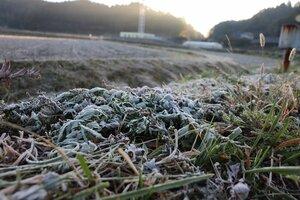 霜が降りてうっすらと白くなる畑(2020年11月5日午前7時10分、亀岡市西別院町)
