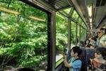叡山電鉄の車窓からモミジを楽しむ乗客(京都市左京区)