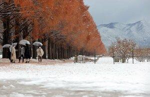 メタセコイア並木にまだ紅葉が残る中、雪で白く染まった路面や山並み(15日午後0時11分、高島市マキノ町)