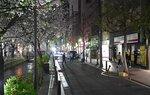 花見シーズンにも関わらず閑散とする木屋町通かいわい(京都市中京区)