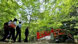 新緑が美しく映える北野天満宮の御土居もみじ苑(22日午前9時53分、京都市上京区)