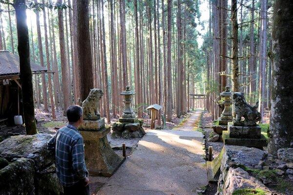 賀茂神社の社殿前から見た参道。インターネット上では「異世界の入り口のよう」と話題になっている(京都市右京区京北中江町)