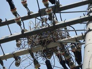 電柱上に作られたカラスの巣。素材の針金ハンガーや木の枝が停電を引き起こす(京都市中京区佐井通御池上ル)