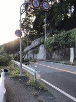 道路上に倒れた木(国土交通省福知山河川国道事務所提供)