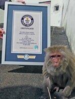 世界最高齢のアカゲザルとしてギネスの認定を受けたイソコ(京都市左京区・市動物園)=市動物園提供