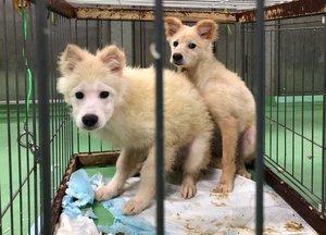 桂川の河川敷で保護した野犬(京都動物愛護センター提供)