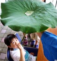 ハスの葉に注がれた水を茎を通して飲み、象鼻杯を体験する子ども(滋賀県草津市下物町・水生植物公園みずの森)