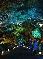 青色にライトアップされた西教寺の参道(大津市坂本5丁目)