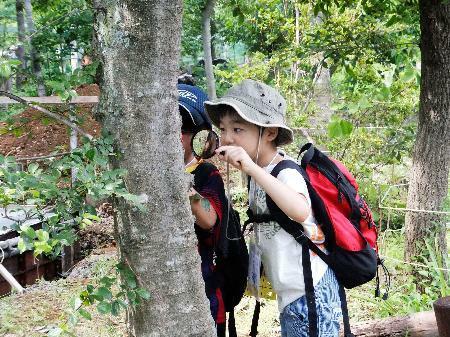 新型コロナウイルスの感染が拡大する前の「自然学校」の様子=2014年7月、山梨県北杜市(日本環境教育フォーラム提供)