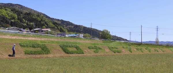 刈り残した雑草で作られた「コロナにマケナイ!」の文字(京都府亀岡市千歳町)