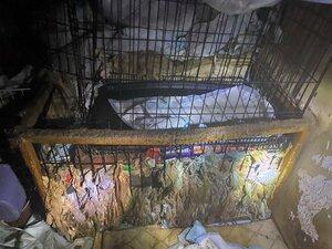 動物愛護団体が女性宅に立ち入った際の室内。汚物やゴミが堆積し、悪臭が漂っていた(6月、京都府八幡市)=神戸ナナプロジェクト提供