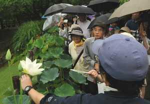 観蓮会で、「巨椋の白鳥」と命名されているハスについての説明を聞く参加者(京都府宇治市広野町・市植物公園)