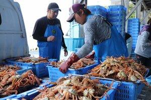 【資料写真】水揚げされたカニを市場に持ち込む漁師