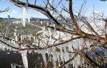 波しぶきが木々にかかって氷結したしぶき氷(8日午前11時28分、草津市・矢橋帰帆島)