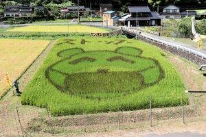 マスクをしたクマの顔が浮かび上がった田んぼアート(京都府福知山市夜久野町直見)