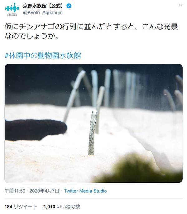 チンアナゴを紹介する京都水族館のツイッター。「#休園中の動物園水族館」と付けられている