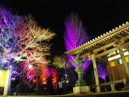 先月行われた試験点灯で木々が鮮やかな色で照らし出された神童寺境内(木津川市山城町)