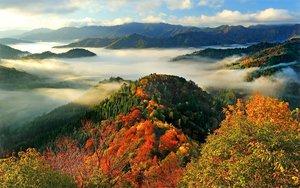 太陽の光を浴びて鮮やかに輝く紅葉と雲海(6日午前7時13分、滋賀県高島市朽木小入谷)