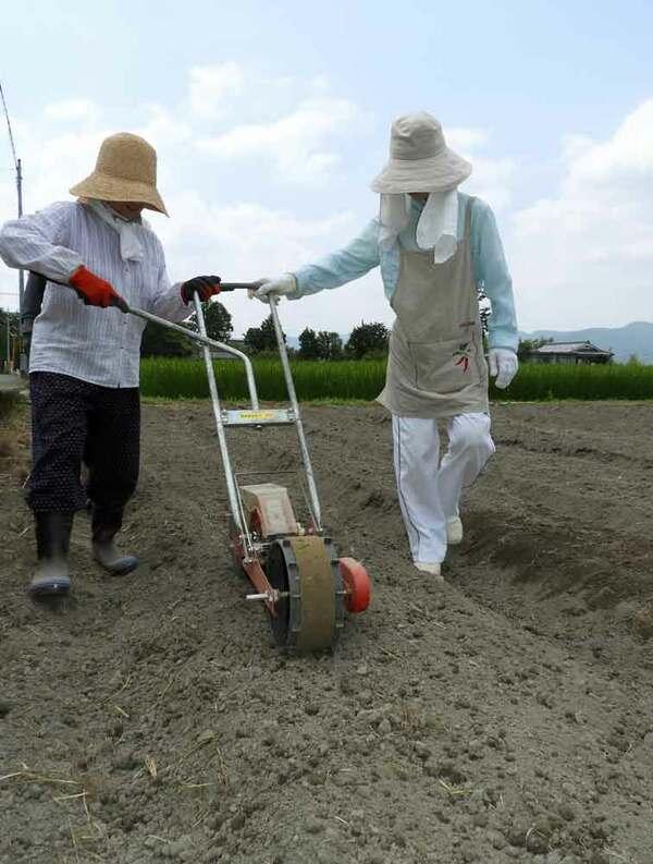 炎天下で、ソバの種まきを行う参加者(京都府亀岡市保津町)