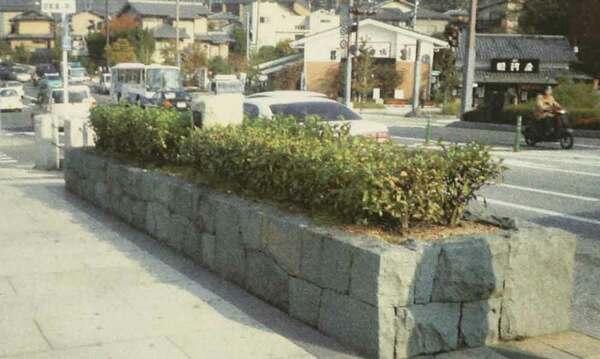 2005年に撮影された宇治橋の茶樹帯=府山城北土木事務所提供
