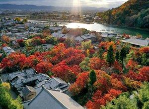朝の光を受けて色鮮やかに境内を彩る紅葉。奥に見える嵐山や渡月橋も光輝いていた(26日午前8時8分、京都市右京区・天龍寺塔頭の宝厳院)=小型無人機から
