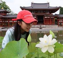 鳳凰堂を背に花を咲かせた平等院蓮(宇治市・平等院)