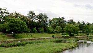 府立植物園の西側。木々の向こう側にバックヤードが広がる(京都市左京区)