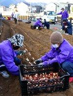 春に向けてチューリップの球根を植える会員たち(滋賀県亀岡市西つつじケ丘)