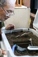 さなぎになる直前の幼虫を成虫に育てる装置(滋賀県守山市三宅町・市ほたるの森資料館)