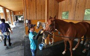 馬房内で職員に世話される引退競走馬(栗東市六地蔵)