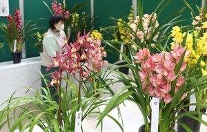鮮やかな色の花が並ぶ会場(京都府福知山市猪崎・市都市緑化植物園)