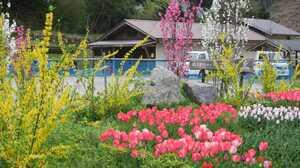花々が咲き競う住民手づくりの花壇(京都府南丹市美山町鶴ケ岡)