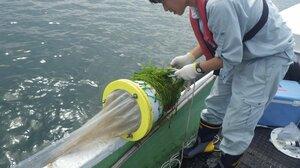 琵琶湖の水を採取する県職員(大津市唐崎沖)