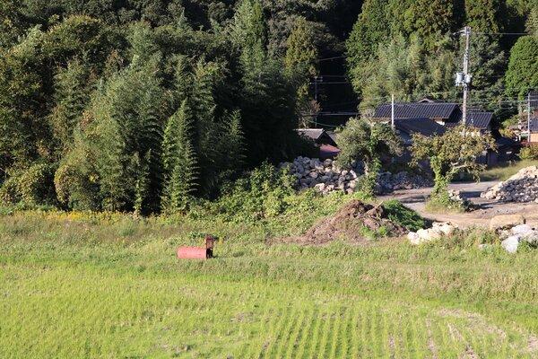 被害を受けて設置されたクマの捕獲おり。左上のササ林が被害現場(京都府与謝野町温江)