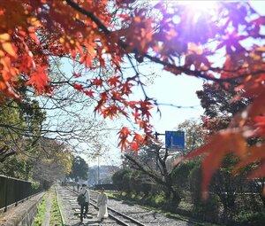 季節外れの暑さとなり、上着を手にして紅葉が色づいたインクラインを歩く人たち(2020年11月19日午前11時30分、京都市左京区)