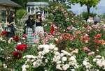 バラの花を見ながら散策を楽しむ来園者たち(大津市柳が崎・びわ湖大津館イングリッシュガーデン)