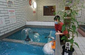 藤袴祭に合わせ、乾燥させたフジバカマを浮かべた薬湯。手前は鉢植えのフジバカマ(京都市中京区・京都玉の湯)