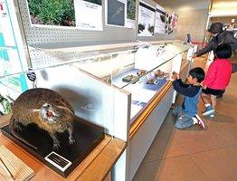 ネズミの仲間の剝製などを展示している会場 (滋賀県草津市下物町・琵琶湖博物館)