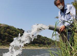 木津川にホースで放流されるアユの稚魚(木津川市加茂町)