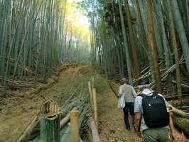 メガソーラーの建設予定地に向けて竹を伐採して造られたとみられる作業道(左側)=京都府八幡市の男山山中