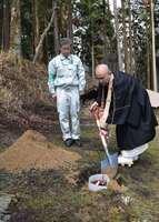 伐採されたヤマザクラの遺伝子を持つ苗木に土をかける小堀執行(大津市坂本本町・延暦寺)