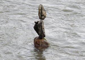 台風で増水した鴨川の流れにたたずむ「奇跡の石積み」(京都市上京区)
