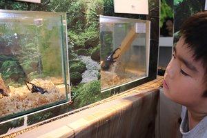 クワガタやカブトムシを間近で楽しめる「世界のクワガタ展」(京都府南丹市日吉町・道の駅「スプリングスひよし」)